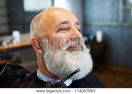 closeup portrait of grey-haired man in barber shop. barber cutting beard with scissors
