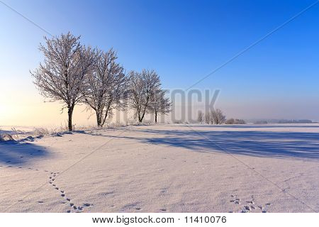 Trees in winter day