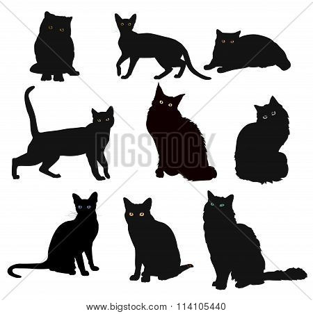 Vector Breed cats silhouette in different poses isolated