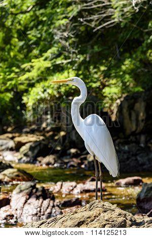 Egret resting on Araçatiba beach