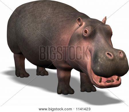 Hippopatamus