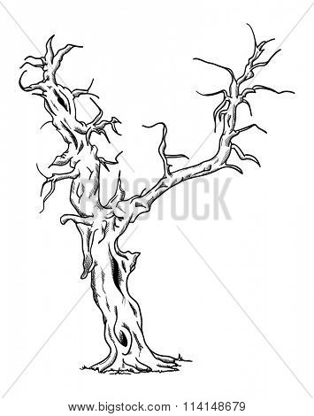 vector - Big old tree - isolated on background