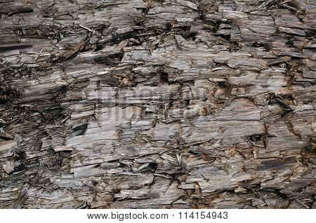 Natural Weathered Grey Taupe Brown Cut Tree Stump Texture, Large Horizontal Detailed Wounded Damaged