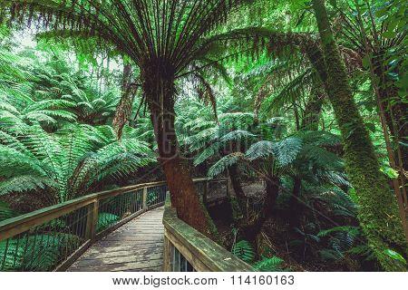 Winding Boardwalk In Australian Rainforest