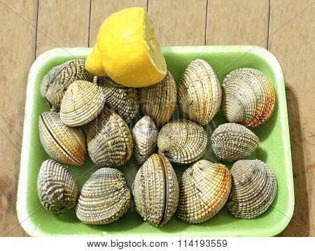 fresh greek seafood kydonia shells bivalve shells