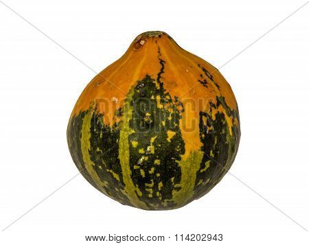 Pumpkin 11 isolated