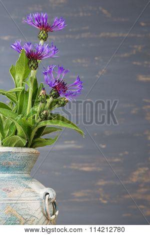 Cornflower (centaurea cyanus) in the blue vase over the blue background.