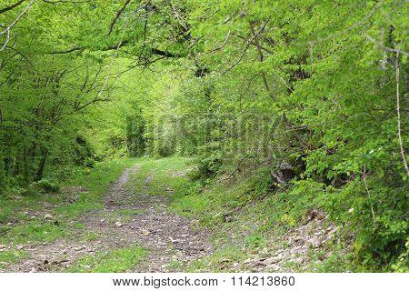 Mountainous terrain, streams of spring and vegetation