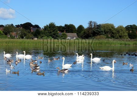 Rural Scene at Hornsea Mere, UK