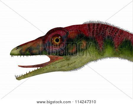 Compsognathus Dinosaur Head