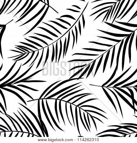 Tropical palm leaves black and white. Seamless pattern