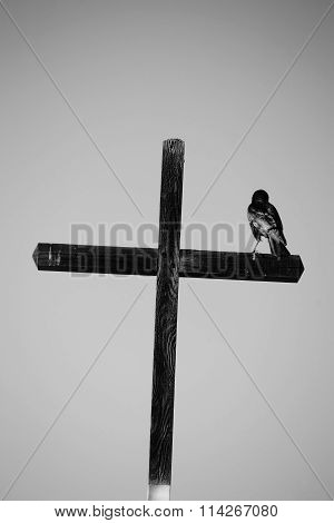 Raven sitting on Cross