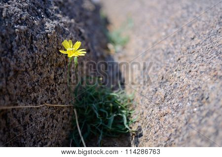 Wildflowers In A Rock Crevice