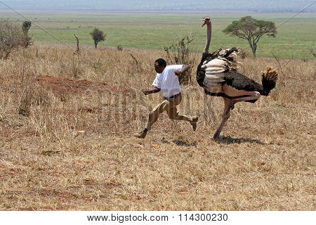 Ostrich attack