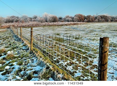 Wintery Fence Line