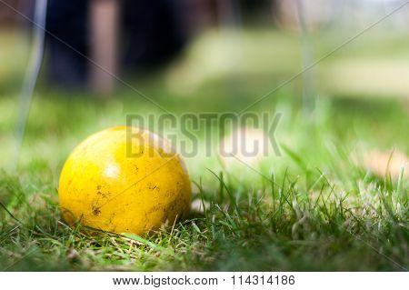 Yellow Croquet Ball Close-up