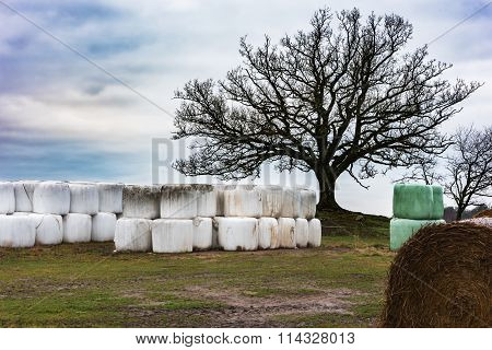 Silage Bales Under A Tree