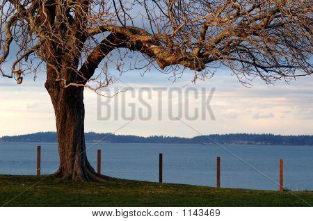 Winter Tree Near Water