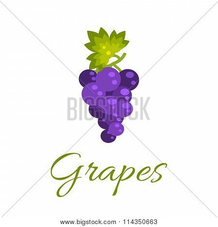 Grapes isolated vector icon. Logo concept.