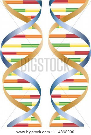 vector two strands of DNA