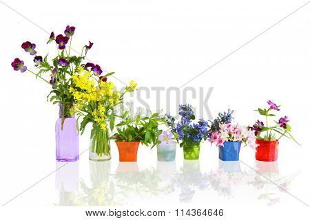 Colorful early summer flowers in small containers