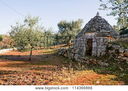 trulli country abandoned and olive tree