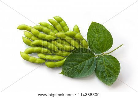 Fresh soy beans in the pods with leaves