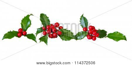 Row of holly leaves and red berries isolated on white