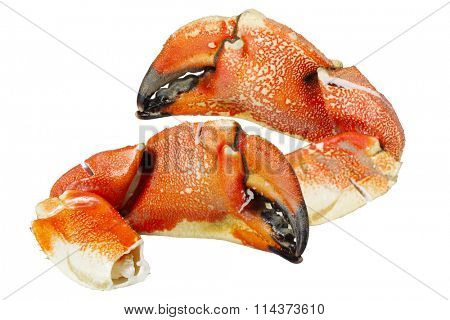Jonah Atlantic Coast Rock Crab Claws isolated on white background