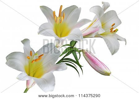 Multi color lily flower bouquet isolated on white background