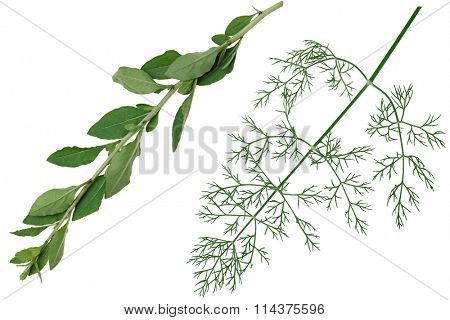 Set of vegetable herb leaf isolated on white background