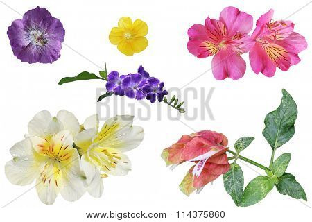 Set of colorful tropical flower isolated on white background