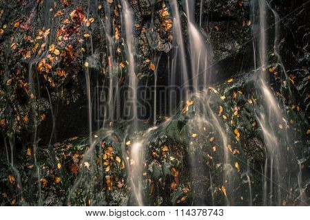 Streams of Water and Leaves