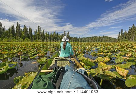 Paddling Through Lily Pads In The Wilderness