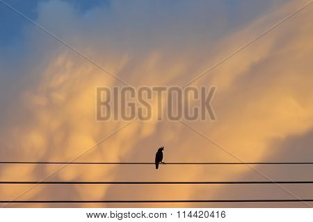 silhouette bird on electric wire in sunset