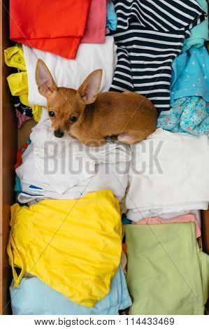 The Dog Who Hid In The Chest.