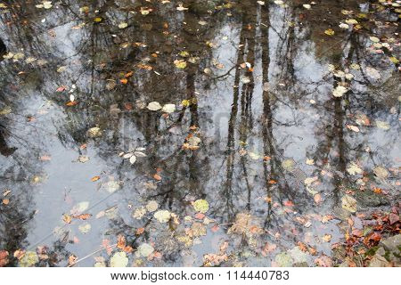 Forest In Autumn With Reflection In Water Strewn With Fallen Leaves