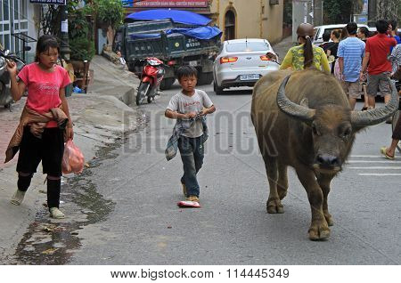 two children are trying to lead huge buffalo
