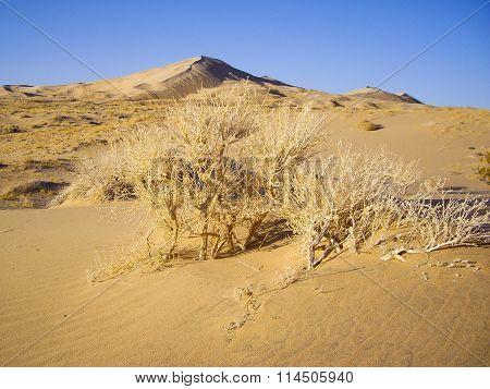 Dry Desert Flora
