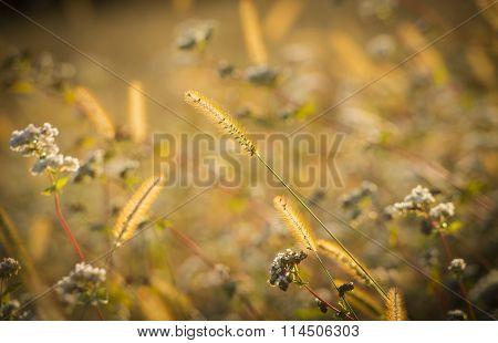 Field / lawn of flowers, Slovenia