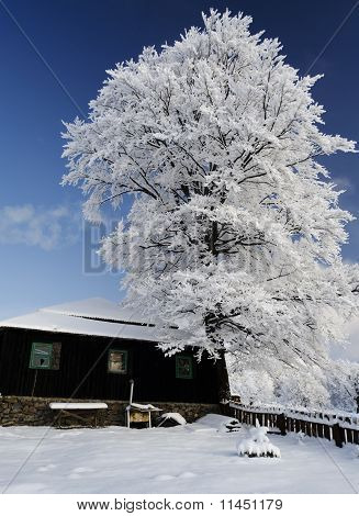 Old Chalet Under Snow Tree In Alps