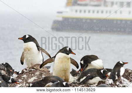 Ronge Island, Antarctica Rookery With Cruise Ship