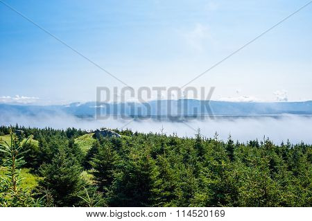 Low Clouds Skimming Tops Of Evergreen Trees