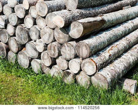 Pile Of Stacked Cut Logs On Grass