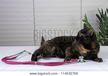 Female Tortoiseshell Tabby Cat waiting on the exam table for the vet, stethoscope on the table