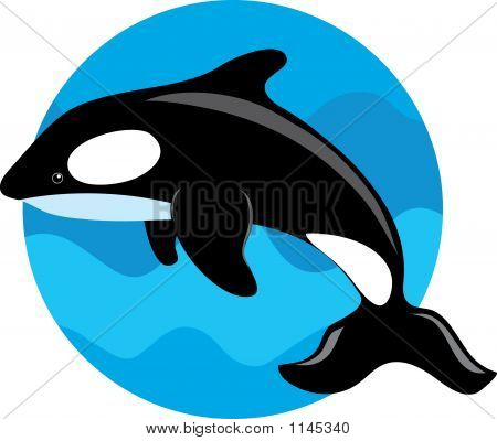 orca whale on a blue circle background poster