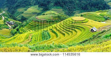 Terraces famous raspberry Mu Cang Chai, Yen Bai, Vietnam
