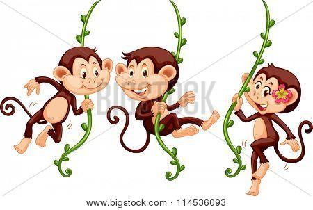 Three monkeys swinging on the vine illustration poster