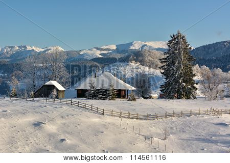 Sunny Day Of A Winter, On Wild Transylvania Hills. Romania. Low Key, Dark Background, Spot Lighting,
