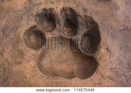 Big Cat Spoor Made In The Artificial Stone